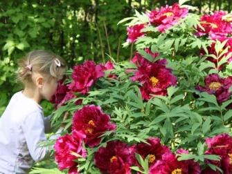 Zobacz najpiękniejsze ogrody Sadyby